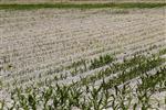 La sécheresse pèsera sur les assureurs, estime moody's