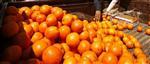Inquiétude sanitaire aux usa, bond des cours du jus d'orange