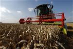 La flambée des cours des céréales met les éleveurs sous pression