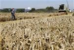 Paris et washington prêts à agir sur les céréales et le soja