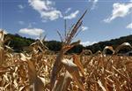 Les prix alimentaires mondiaux ont bondi de 10% en juillet