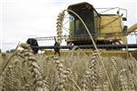 Marché : 3e année consécutive de hausse du revenu moyen des agriculteurs
