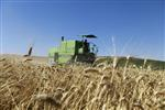 Marché : La Chine pourrait fortement augmenter ses importations de blé