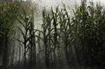Europe : Monsanto renonce à faire homologuer des cultures OGM dans l'UE