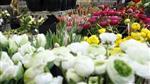 Le fonds Perceva reprend le groupe Monceau Fleurs