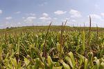 Marché : Monsanto bat le consensus au 2e trimestre