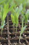 Marché : Baisse de 6% du bénéfice trimestriel de Monsanto