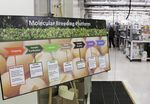 Marché : Monsanto publie un bénéfice en forte baisse au 1er trimestre