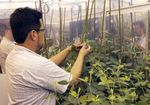 Marché : Monsanto veut rassurer Syngenta sur la faisabilité d'une fusion